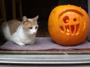 Webster was unimpressed with our Bubs jack-o'-lantern